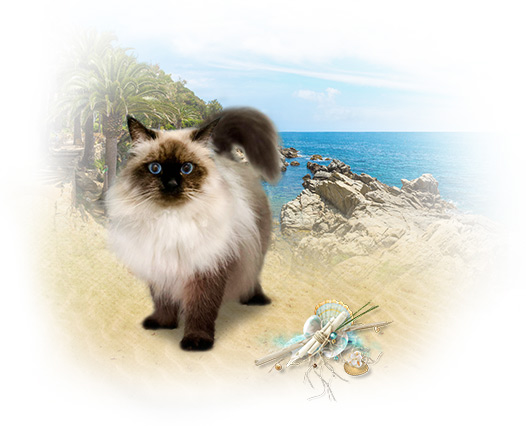 cat4-1